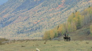 Stock Video Footage of on horseback riding out with autumn beach trees