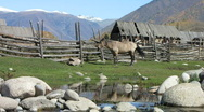 Stock Video Footage of Horse in traditional village