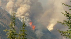 Forest fire, spectacular, #3 Stock Footage