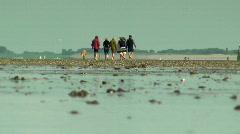 People walking wetlands (coastal area) Stock Footage