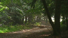 Rain in forest - stock footage