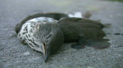 Dead bird. Stock Footage
