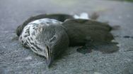 Stock Video Footage of Dead bird.