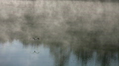 Blue heron on misty lake. - stock footage