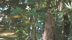 Cypress Swamp on Lake Panasoffkee Clip 2 Stock Footage