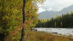 Autumn riverside with golden browns Stock Footage