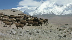 Sheep against mountain peak Stock Footage