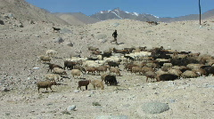Sheppard near karakoram highway - stock footage