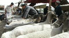 Sheep trading at Kashgar animal market  Stock Footage
