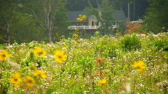 Ragweed field and house05 Stock Footage