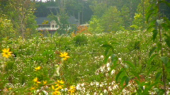 Pollen Stock Footage