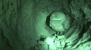 Stock Video Footage of Burrowing Owl in Burrow