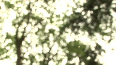 Tree Focus Pull Stock Footage