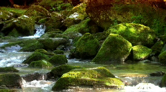 Woodland stream 1 Stock Footage