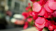 Flowers, cars, pollution Stock Footage