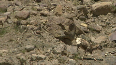 Bighorn Sheep Yellowstone Desert 2 59.94 Stock Footage