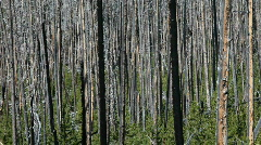 Forest fire aftermath pan P HD 2450 Stock Footage