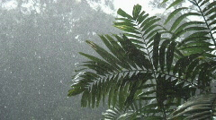Borneo 13 heavy rain 05 Stock Footage