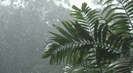 Stock Video Footage of Borneo 13 heavy rain 05