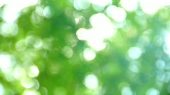 Green leaf defocus Stock Footage