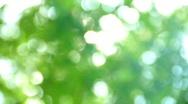 Green leaf defocus Stock Footage