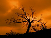 Stock Video Footage of Craggy Tree Sunset 320x240