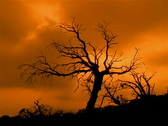 Stock Video Footage of Craggy Tree Sunset PAL