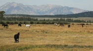 Horses Near Mountain Range in Wyoming Stock Footage