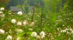 Ragweed field and house04 Stock Footage