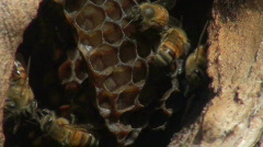 Bee hive macro shot - HD Stock Footage