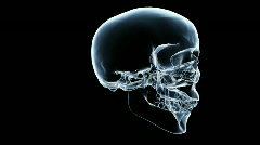 db skull 03 xray hd1080 - stock footage