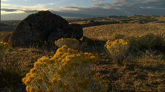 Desert Rocks and Flowers Wide 21 59.94 Stock Footage