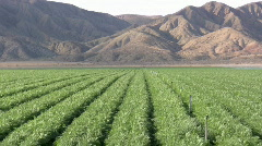 Db desert farm Stock Footage