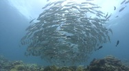 Whirlpool of silver fish Stock Footage