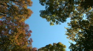Stock Video Footage of Trees in the forest in autumn 1