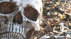 Human Skull on the Rocks 3 - stock footage
