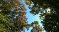 Stock Video Footage of Trees in the forest in autumn