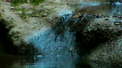 Rapids of a stream in forest. Zoom out Stock Footage