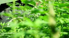 Combine harvester & Plant - stock footage