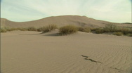 Stock Video Footage of Snake on Desert Sand Dune 1 59.94