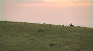 Stock Video Footage of Solo Horse Rider Wide 1 59.94
