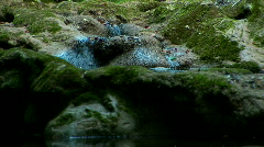 Beautiful forest. Stream Flows. Zoom out. Stock Footage