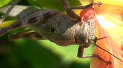 Front view of a big insect feeding up - stock footage
