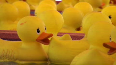 Rubber Ducks Swim HD Stock Footage