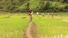 Development Worker Adding Organic Fertilizer To Rice Field Stock Footage