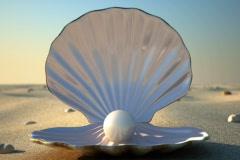 SeaShell - stock footage