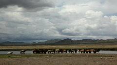 Mongolian horses Stock Footage