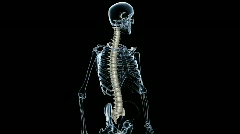 Detailed Skeleton with Spinal Cord rendered as Bone. Looping. - stock footage