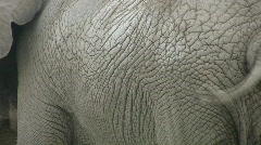 Elephant skin. Two shots. Stock Footage