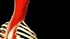 3D animation illustrating the human anatomy Stock Footage